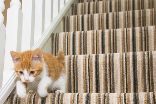 Home Striped Carpet
