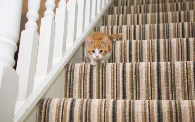 Striped Carpet